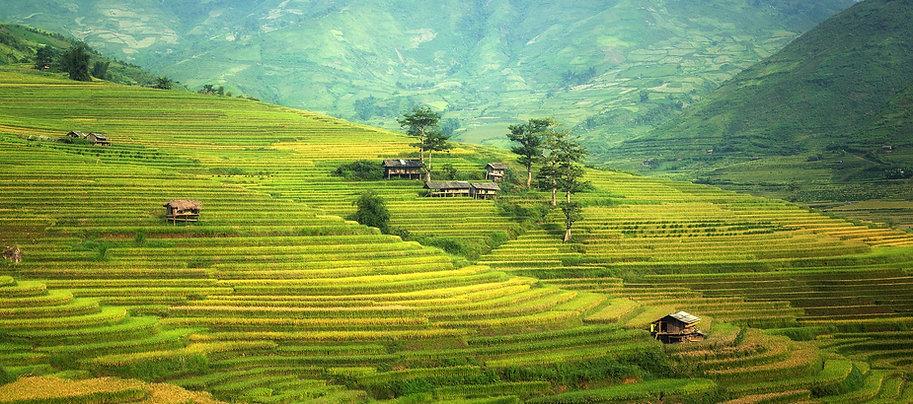 agriculture-1807574_1920.jpg