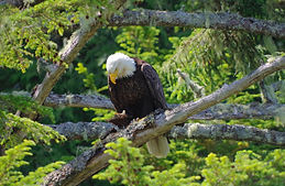 Great Bear Rainforest dreamstime.jpg