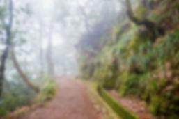 bigstock-Levada-Walk-Through-Laurel-For-