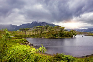 bigstock-Pine-Island-Connemara-Nationa-2