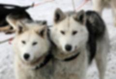 Dog sled pixa.jpg
