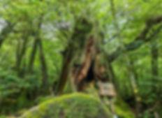 AdobeStock_NIdai-Ohsugi.jpeg
