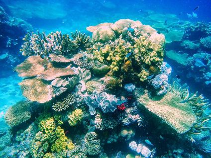 bigstock-Coral-Reef-In-Somosomo-Strait--