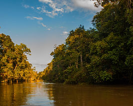 bigstock-Kinabatangan-River-Rainforest-2