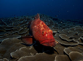 fish-1118892_1920.jpg