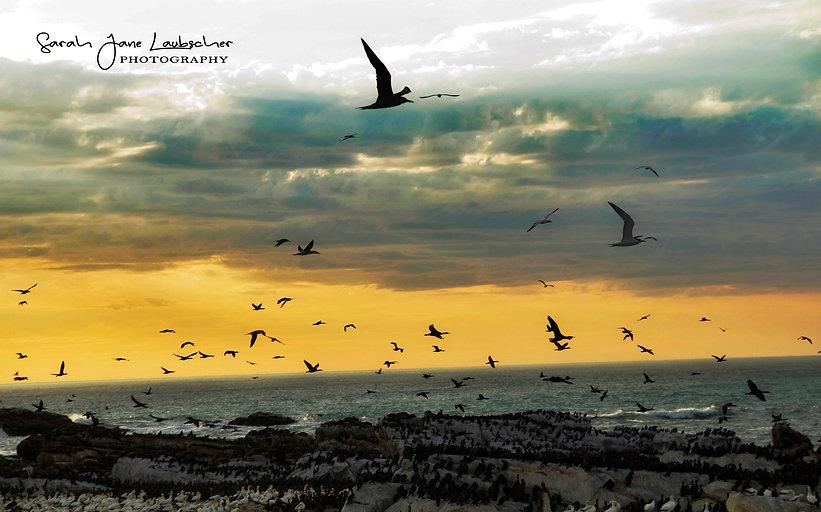 Lamberts bay sunset 2.jpg