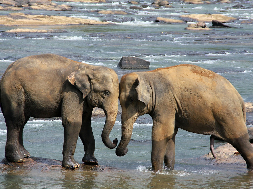 elephant-471480_1920.jpg
