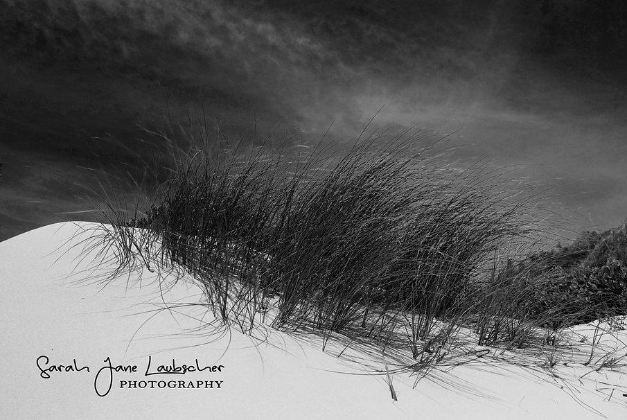 Dune grass Betty's bay.jpg