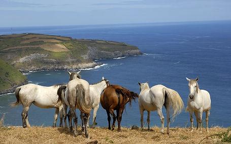 bigstock-horses-at-the-coast-of-azores--