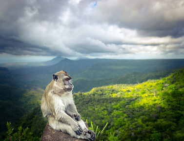 bigstock-Monkey-at-the-Gorges-viewpoint-