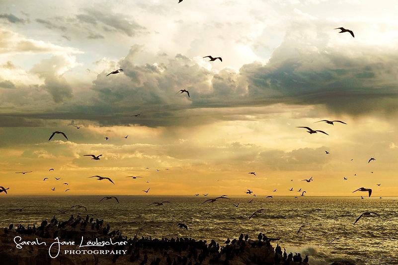 Lamberts bay sunset.jpg
