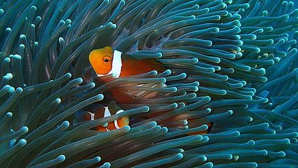 bigstock-Sabah-Underwater-World-26850460