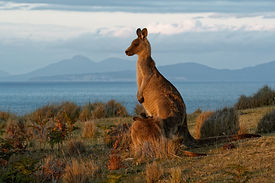 bigstock-Tasmania-248642263.jpg