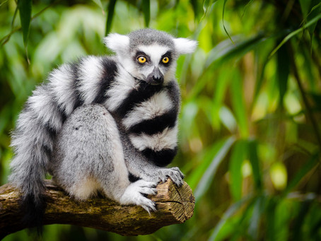 Magnificent Madagascar: Things to See and Do on This Beautiful Island Nation