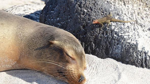 Seals - Galapagos