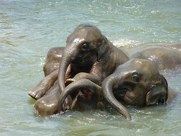 baby-elephant-256657_1920.jpg