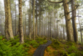 bigstock-Ancient-Forest-148660835.jpg