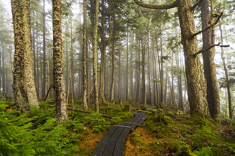 bigstock-Ancient-Forest-148660835.jpg