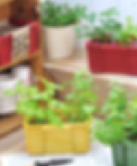 DOUBLE HERB Container.jpg