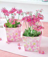 Sakurasou Floral Container.jpg