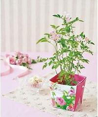 Mini Rose Floral Container.jpg