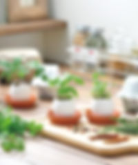 Egglings Cultivation Set.jpg