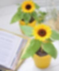 Bloom small Himawari - Sunflower.jpg