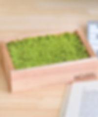 Moisst Moss.jpg