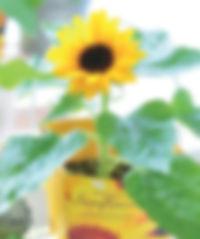 smile sunflower.jpg
