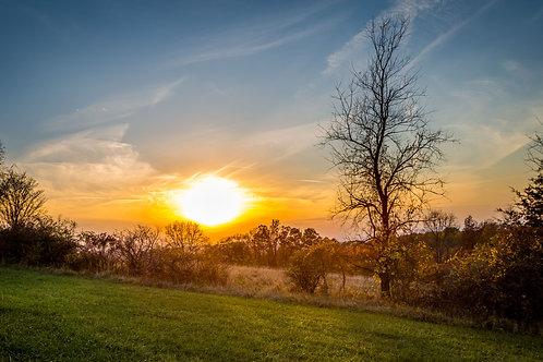 Frail Sunset