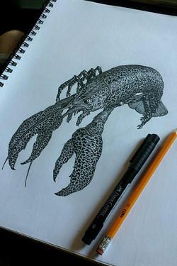 Crawfish study