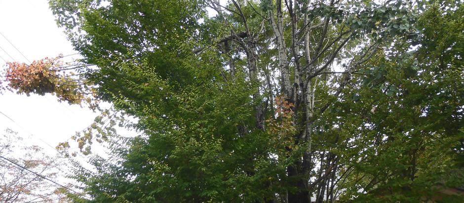 倒木や枝が折れている場所を見つけたら管理組合にお知らせ下さい