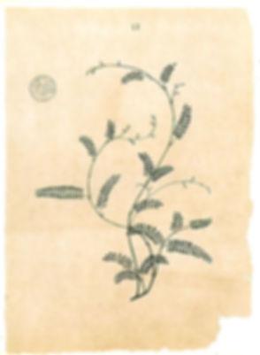 Logo-saadaoui.co.jpeg