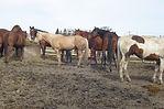 field+of+horses.jpg