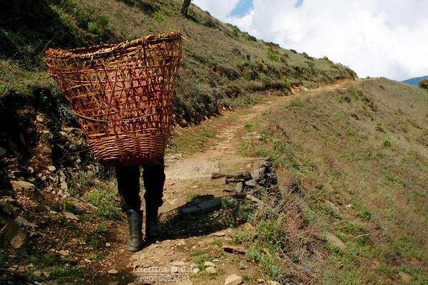 Rice porter Nepal.jpg