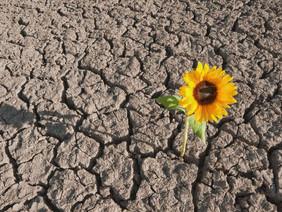 Meeting live - Resilienza e gestione dello stress in periodi di crisi