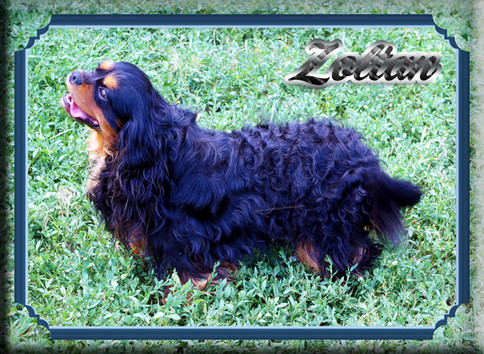 Zoltan 2 7-19.jpg