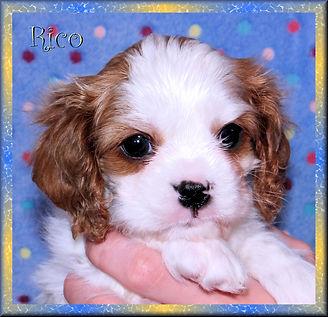 19-02-04 Rico 1 44d.jpg