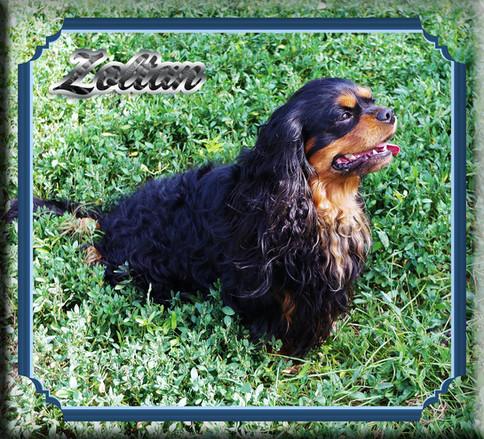 Zoltan 3 7-19.jpg