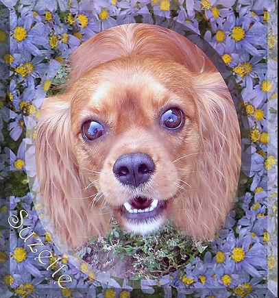 Cavalier King Charles Spaniel breeder Suzette