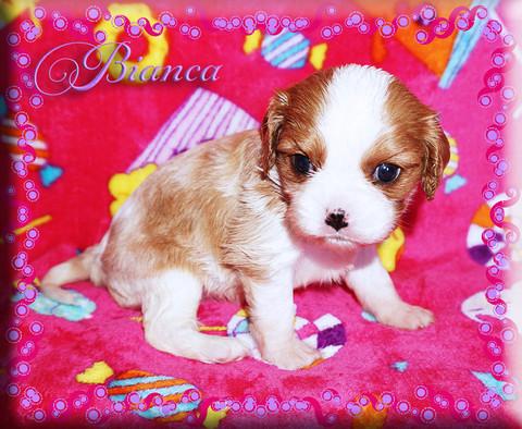 21-03-26 Bianca 1 4w.jpg