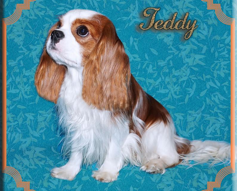 Teddy 1 5-20.jpg