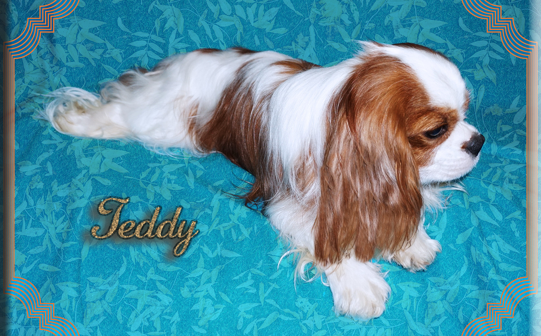 Teddy 6 5-20.jpg