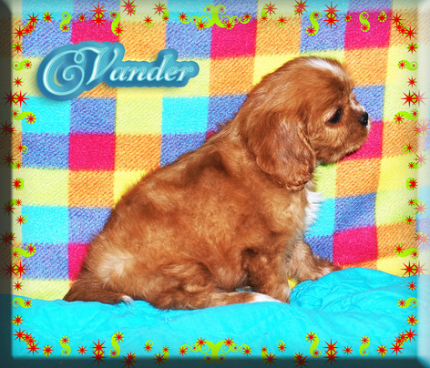 21-01-01 Vander 4 60d.jpg
