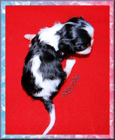 Tiny Minnie, a girl @ 25 days old