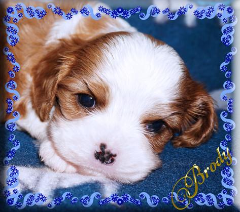 21-03-26 Brody 1 4w.jpg