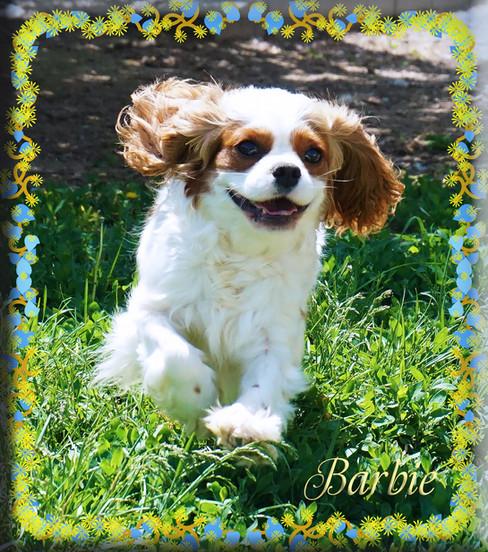 Barbie 2 5-25-20.jpg