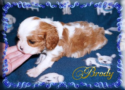 21-03-26 Brody 2 4w.jpg