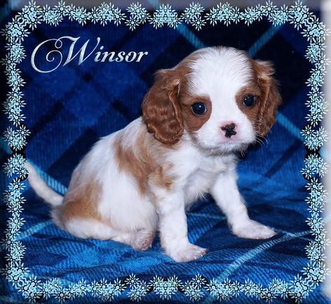 21-01-07 Winsor 3 7w.jpg