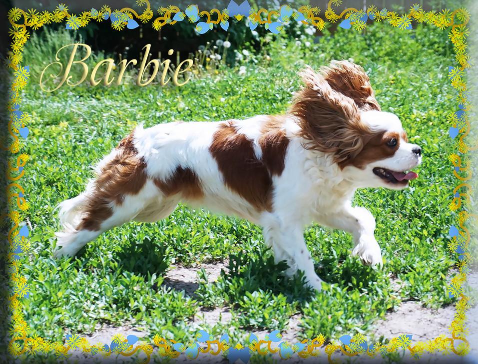 Barbie 1 5-25-20.jpg
